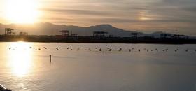 La Laguna di Santa Gilla