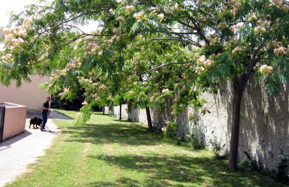 Zona verde nel canile comunale di Cagliari