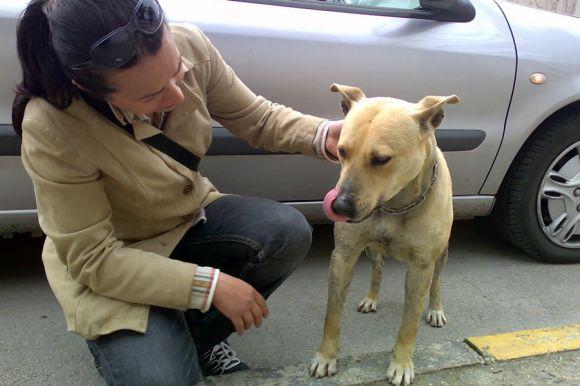 Volontaria che accudisce cane randagio - foto ENPA